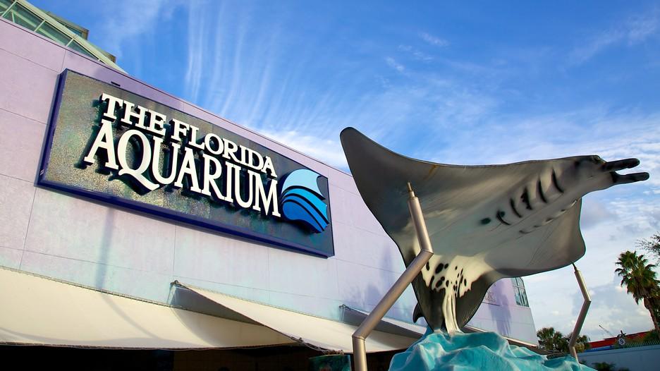 Flug Und Hotel Tampa Florida