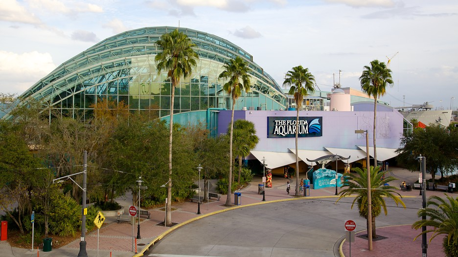 The Best Tampa Vacation Packages 2017 Save Up To C590 On Our Deals Expedia Ca