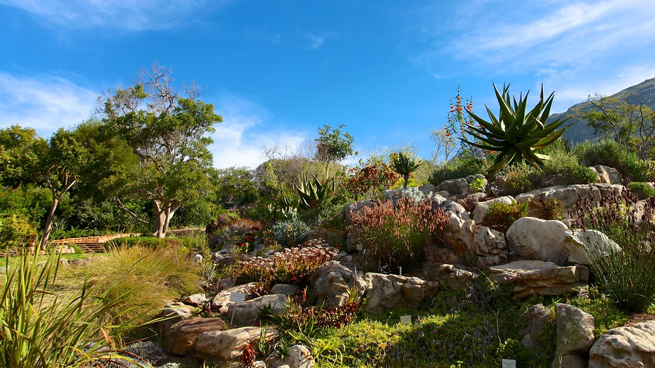 Kirstenbosch National Botanical Gardens In Cape Town