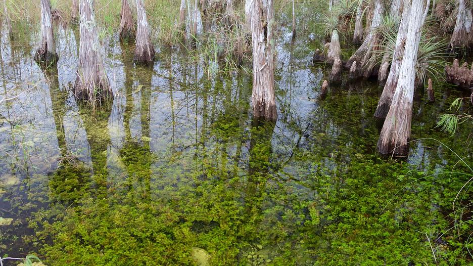 エバーグレーズ国立公園の画像 p1_4