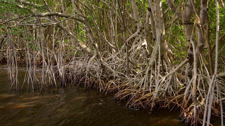 エバーグレーズ国立公園の画像 p1_33