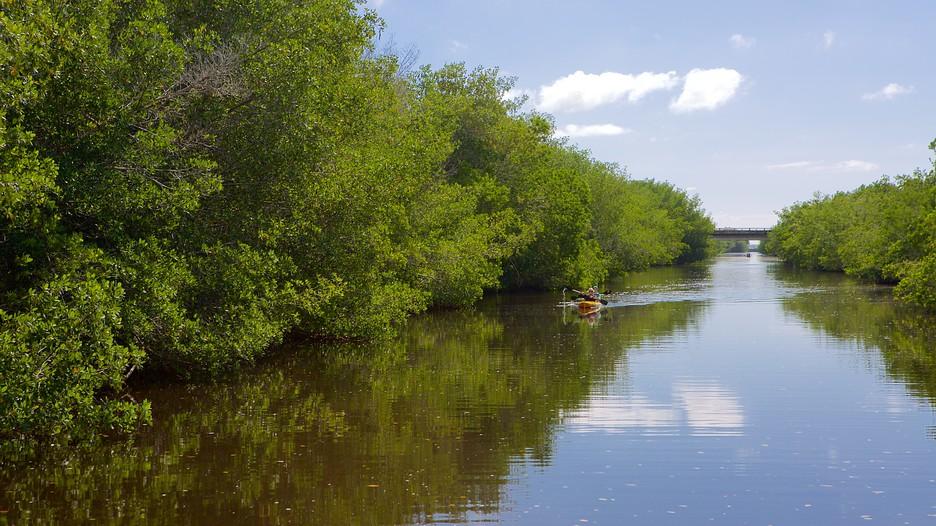 エバーグレーズ国立公園の画像 p1_30