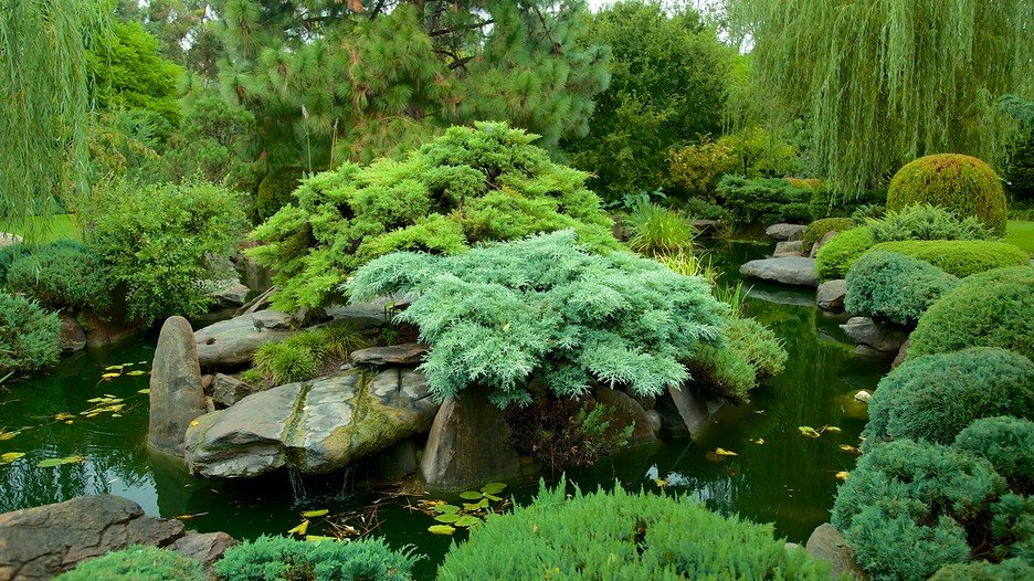 Himeji gardens adelaide south australia attraction for Adelaide gardens