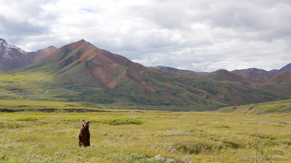 Denali National Park Vacations Explore Cheap Vacation
