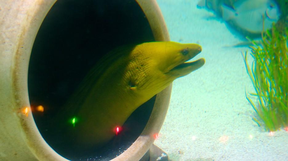 Sea Life Aquarium In Kansas City Missouri Expedia