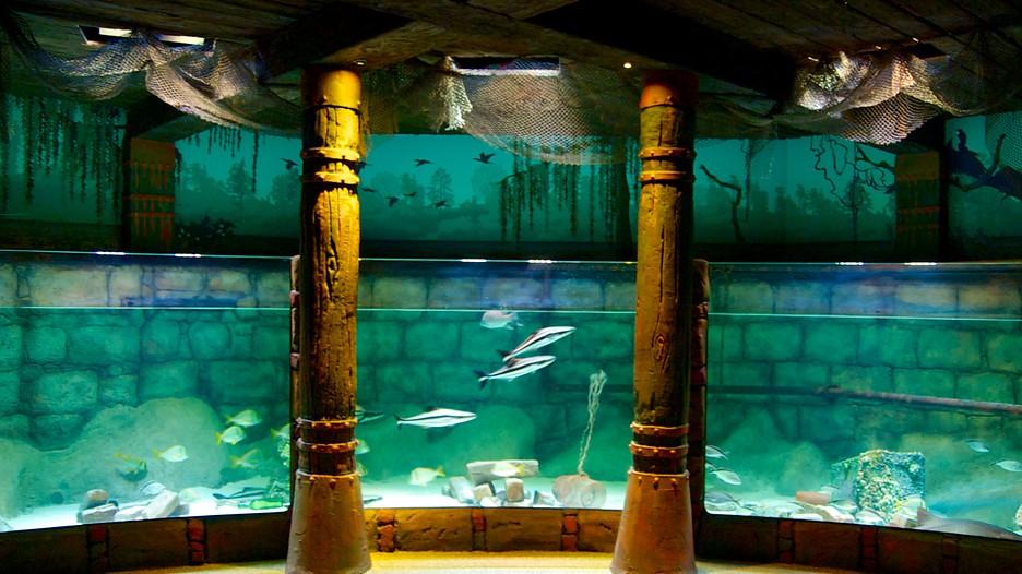 sea life aquarium in kansas city missouri expedia. Black Bedroom Furniture Sets. Home Design Ideas