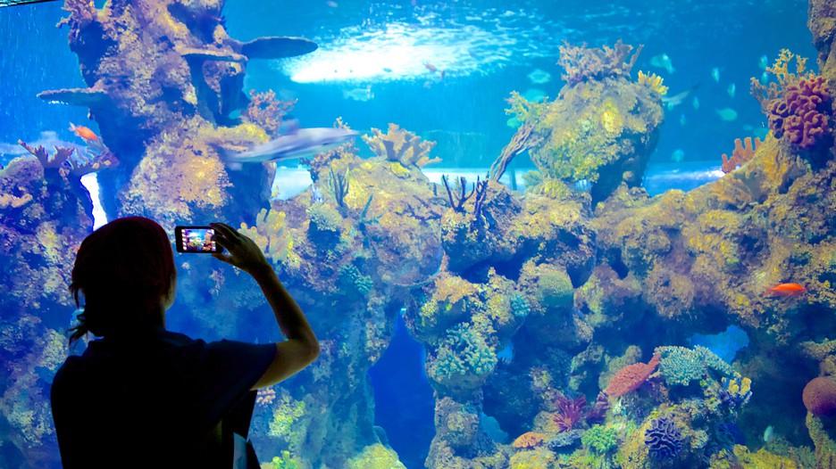 Malta National Aquarium - Malta - Tourism Media