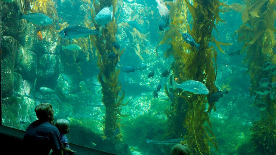 Birch Aquarium in La Jolla, California | Expedia