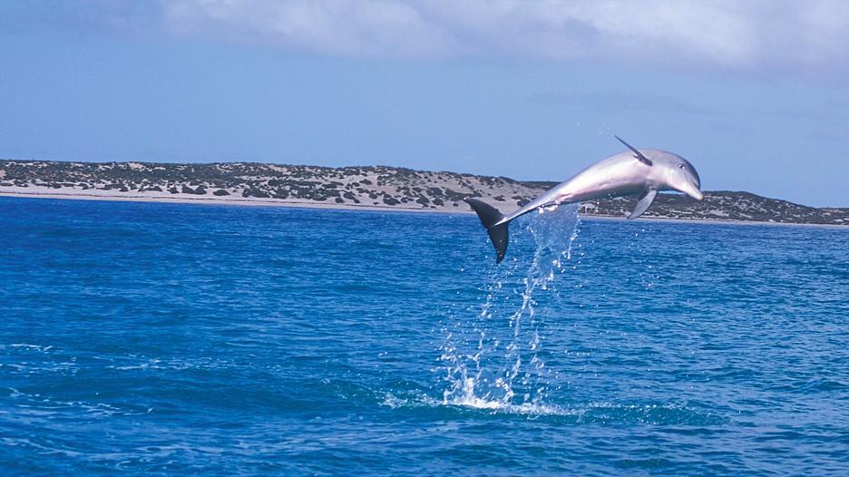 Shark Bay Holidays Cheap Shark Bay Holiday Packages