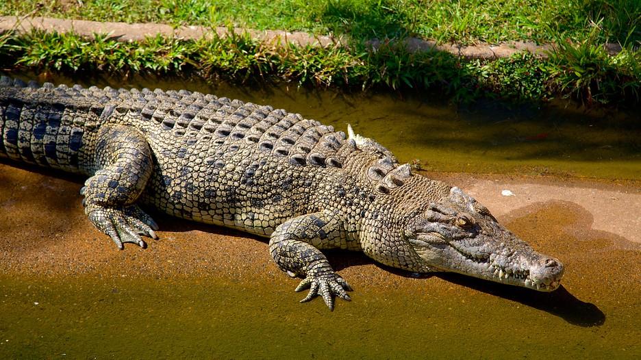 Crocodylus Park Knuckey Lagoon Northern Territory