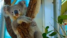 タロンガ動物園 - シドニー
