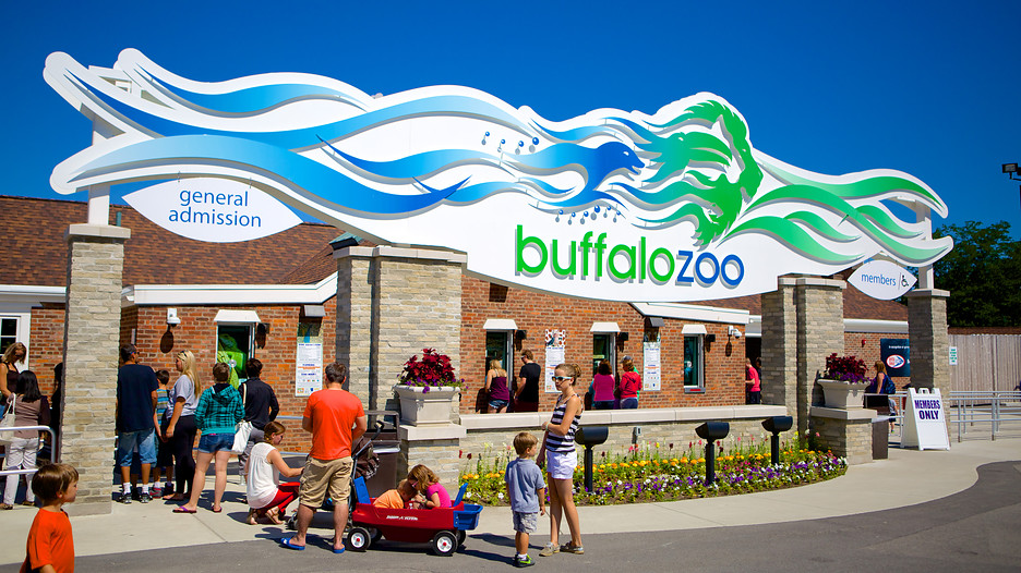 buffalo zoo The latest tweets from buffalo zoo gorilla (@buffzoogorilla) i'm the gorilla who nearly pulled a andy dufresne back in the cage for now.