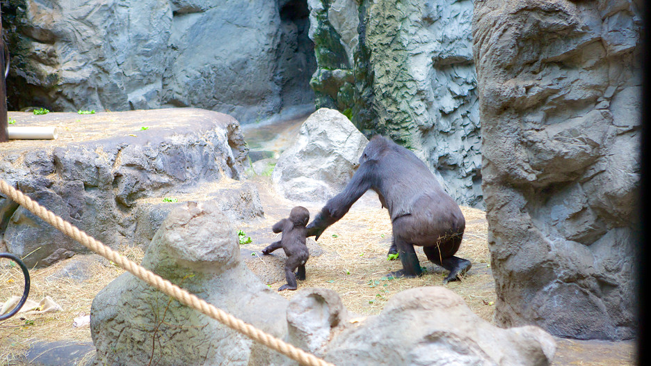 Buffalo Zoo In Buffalo New York Expedia