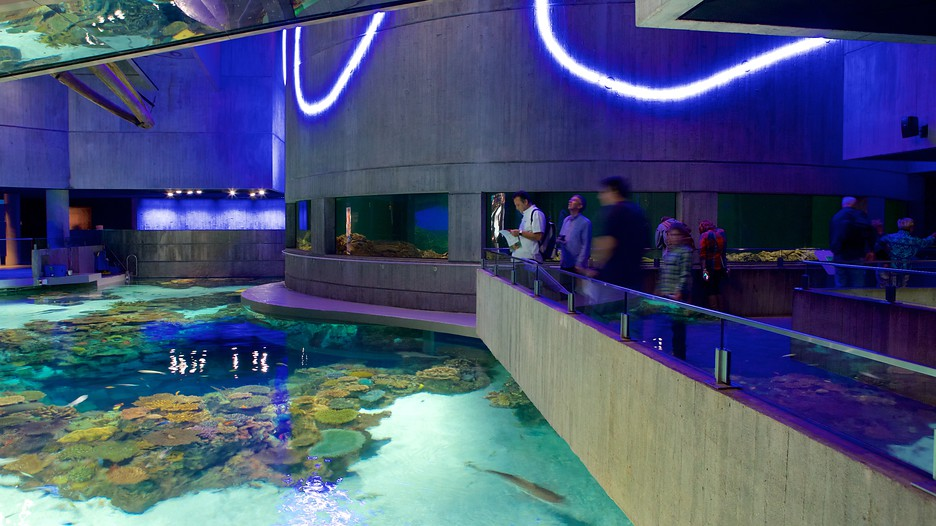 National Aquarium In Baltimore In Baltimore Maryland