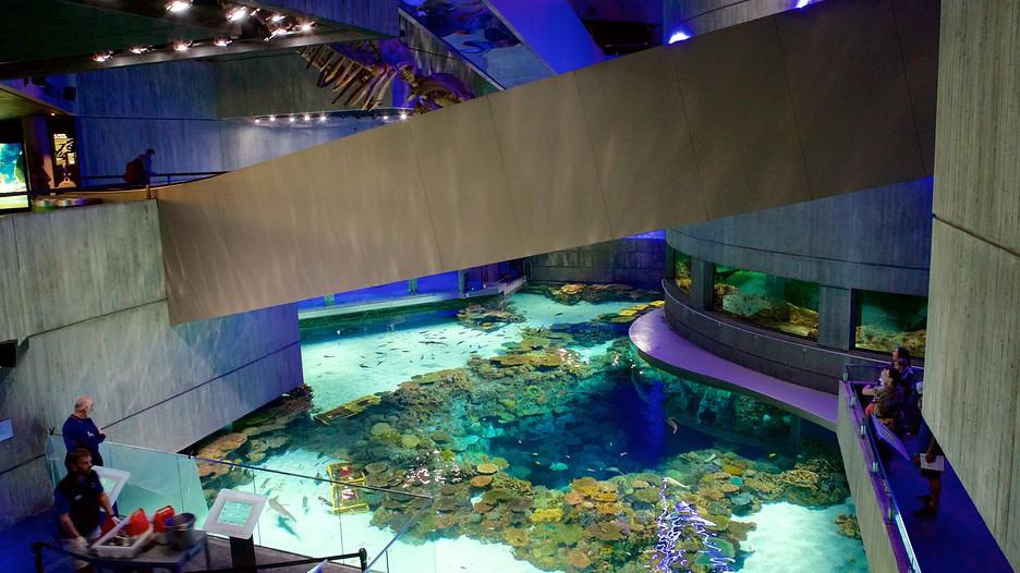 Aquariums In Maryland