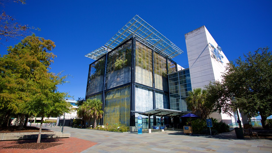 South Carolina Aquarium In Charleston South Carolina