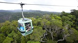 Showing item 12 of 34. Skyrail Rainforest Cableway - Cairns - Tourism and Events Queensland