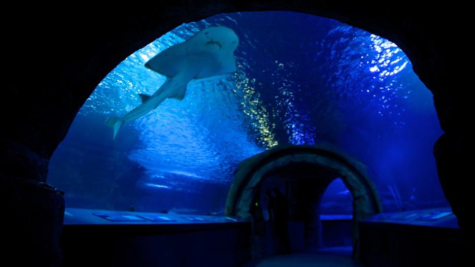 Newport Aquarium in Newport, Kentucky   Expedia