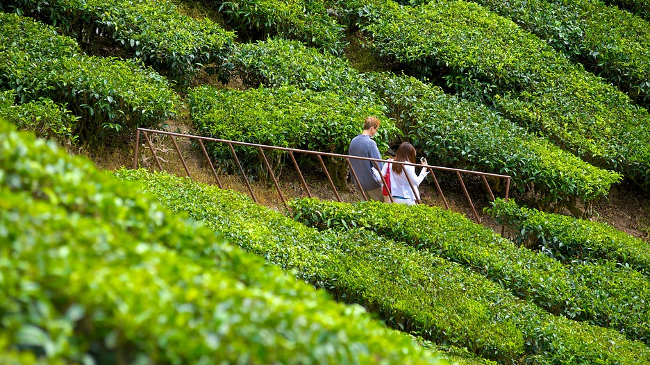 cameron highland trip essay There are more attraction in cameron highlands seach like visit vegetable farm, flower nurseries, museum, waterfall, catuts village, buddhist temple, bee farm, tea plantation & visit rafflesia tour.