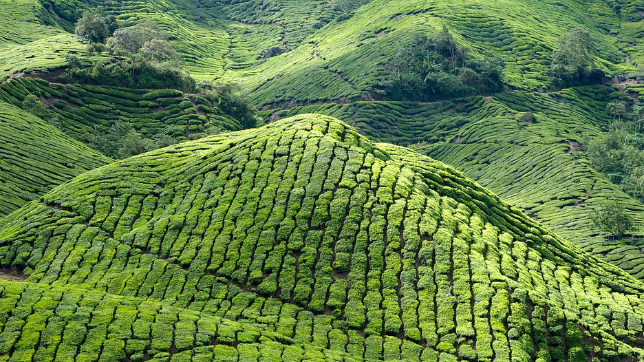 Cameron Highlands Malaysia  City new picture : Cameron Highlands Vacations: Bundle & Save Up to $570