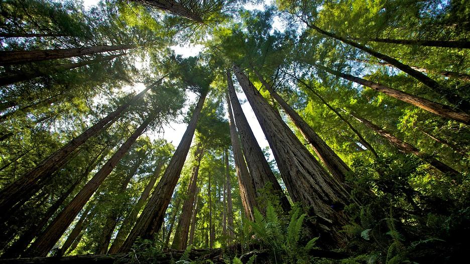 Car Rental In San Francisco >> Muir Woods in San Francisco, California | Expedia.ca