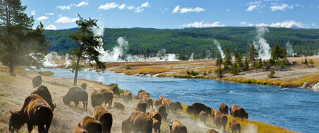 Yellowstone National Park hotels