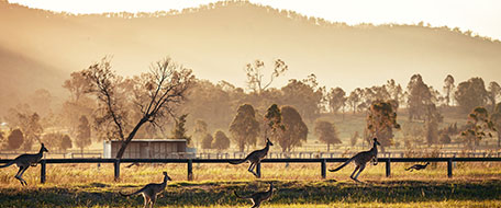Hunter Valley hotels