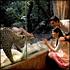 Night Safari Admission