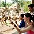 Singapore Zoo Admission