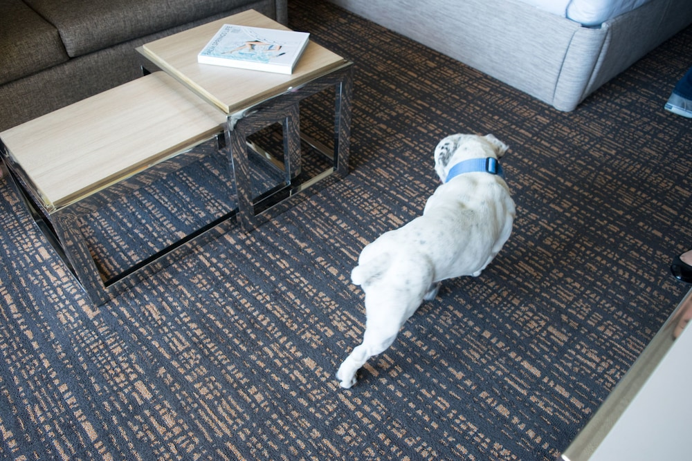 Pet-Friendly, DoubleTree by Hilton Hotel Golf Resort Palm Springs