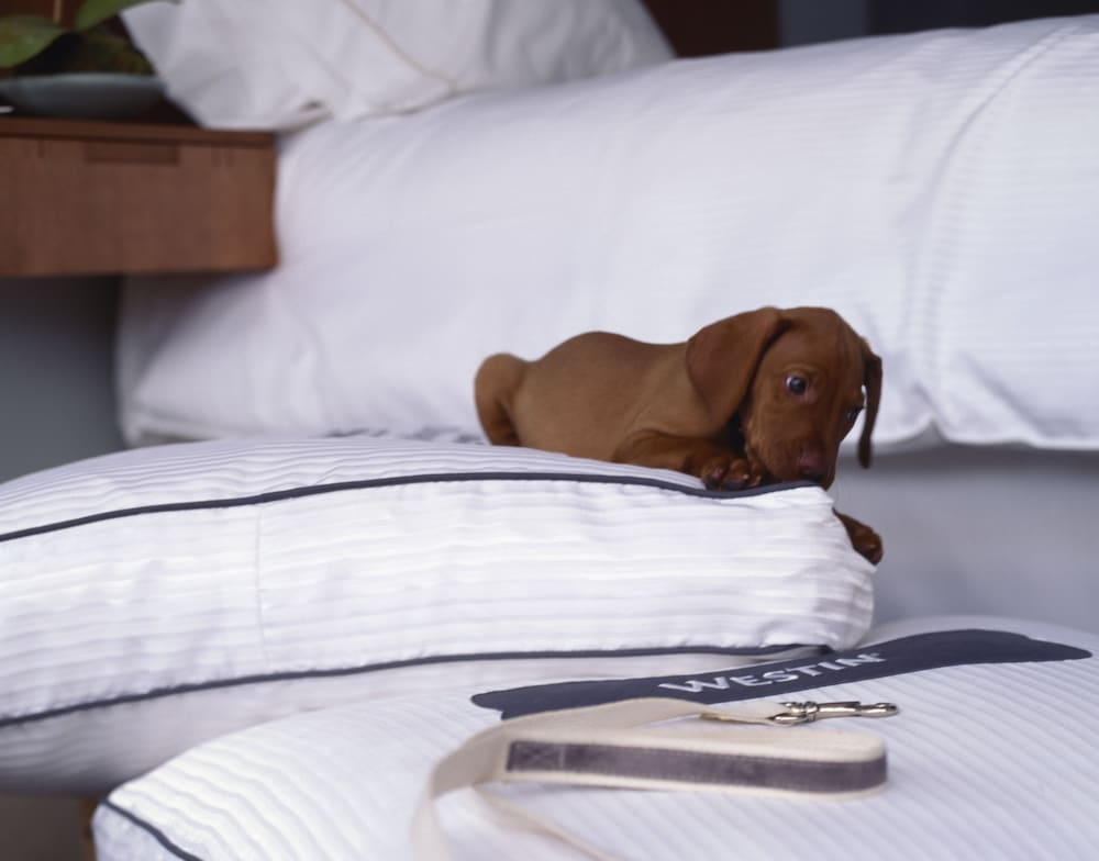 Pet-Friendly, The Westin San Francisco Airport