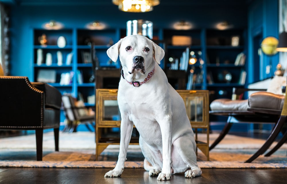 Pet-Friendly, Claremont Club & Spa - A Fairmont Hotel
