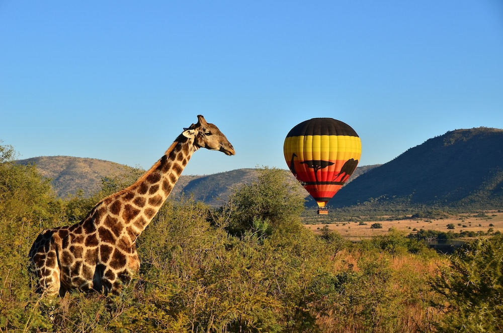 Game Drive, The Cascades Hotel at Sun City Resort
