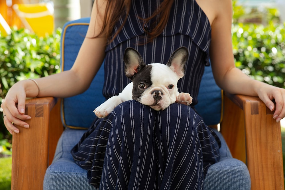 Pet-Friendly, The Confidante Miami Beach - in the Unbound Collection by Hyatt