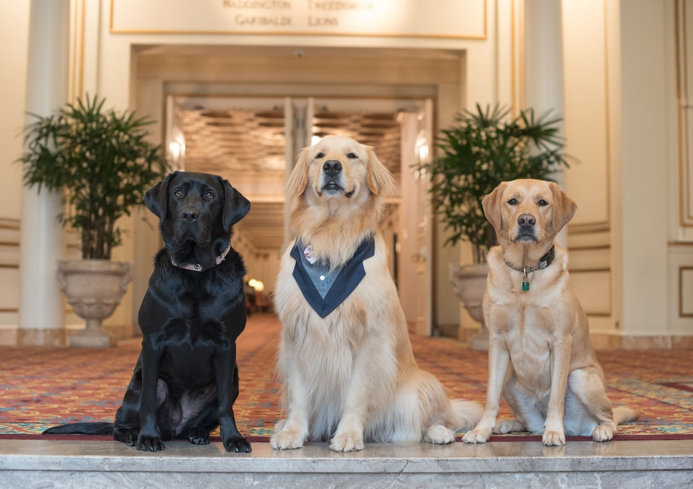 Pet-Friendly, Fairmont Hotel Vancouver