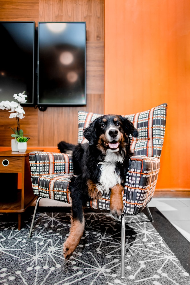 Pet-Friendly, The Curtis Denver - a DoubleTree by Hilton Hotel