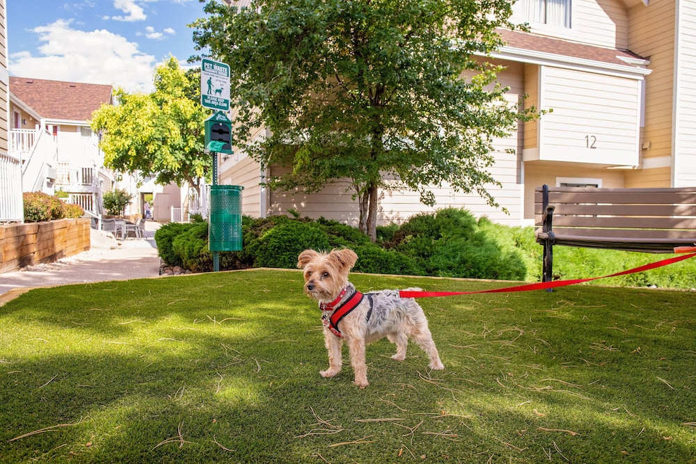 Pet-Friendly, Residence Inn by Marriott Denver Downtown