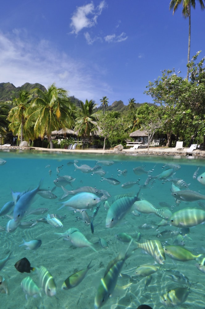 Beach, InterContinental Resort and Spa Moorea