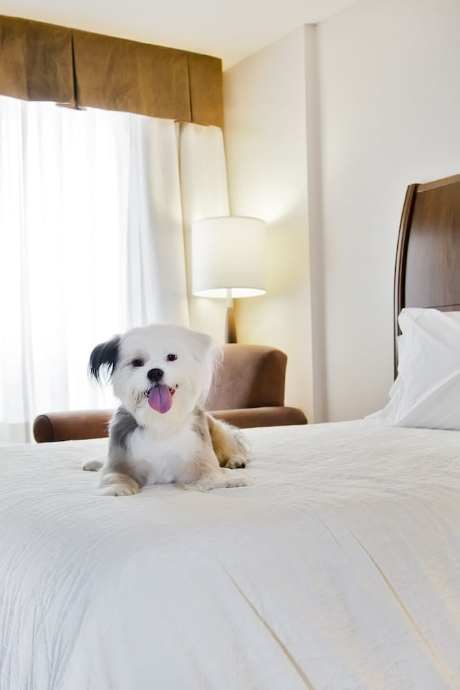 Pet-Friendly, Hilton Garden Inn Saskatoon Downtown