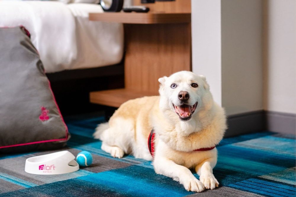 Pet-Friendly, Aloft Columbia Harbison