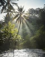 Four Seasons Resort Bali at Sayan (12 of 103)
