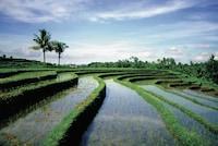 Four Seasons Resort Bali at Sayan (8 of 103)