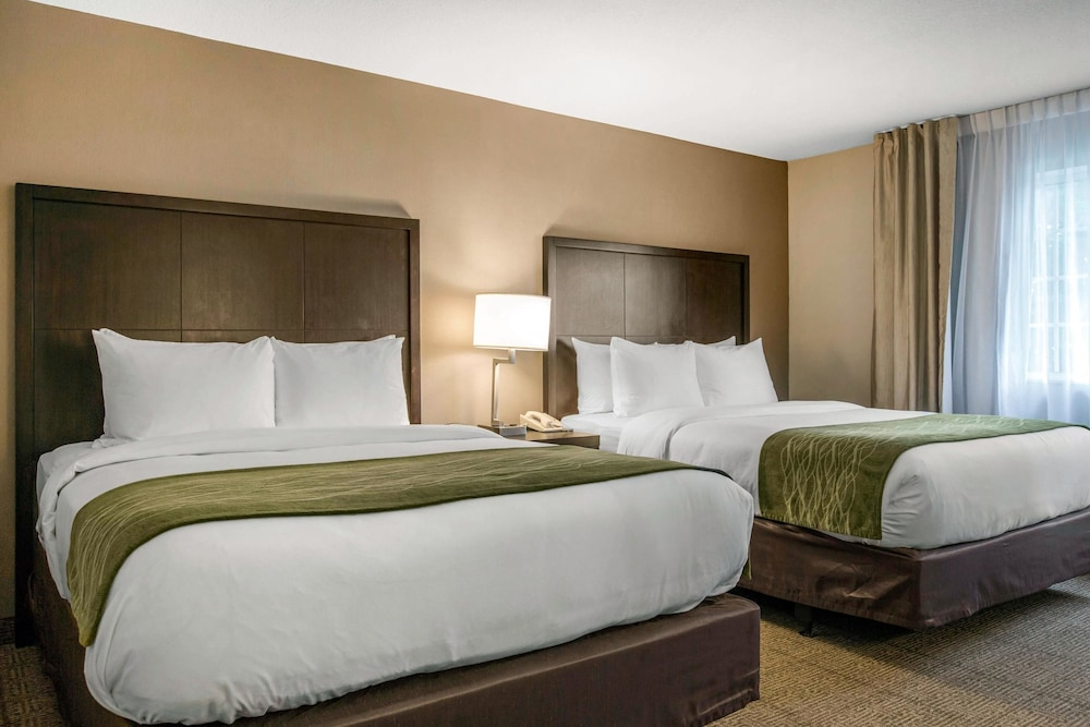 Room, Comfort Inn & Suites San Diego - Zoo SeaWorld Area
