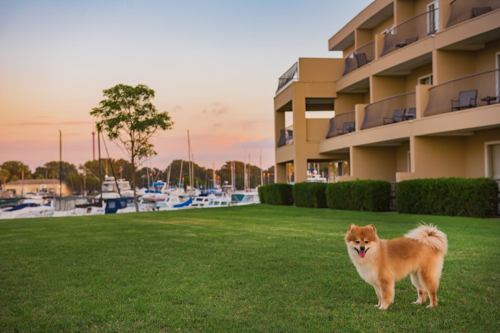 Pet-Friendly, The Dana on Mission Bay
