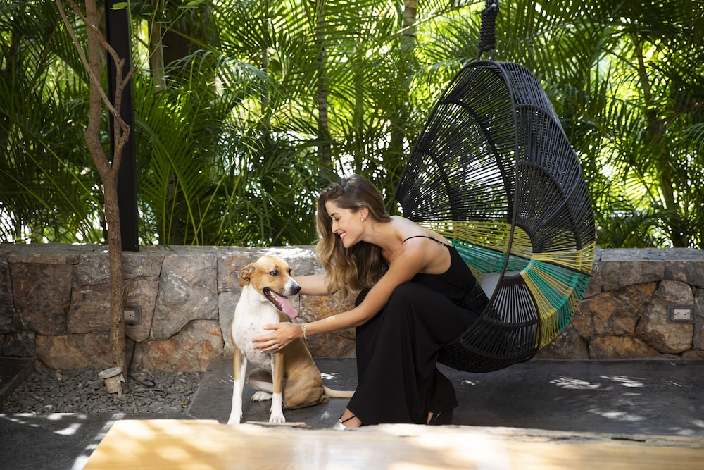 Pet-Friendly, Thompson Zihuatanejo, a Beach Resort