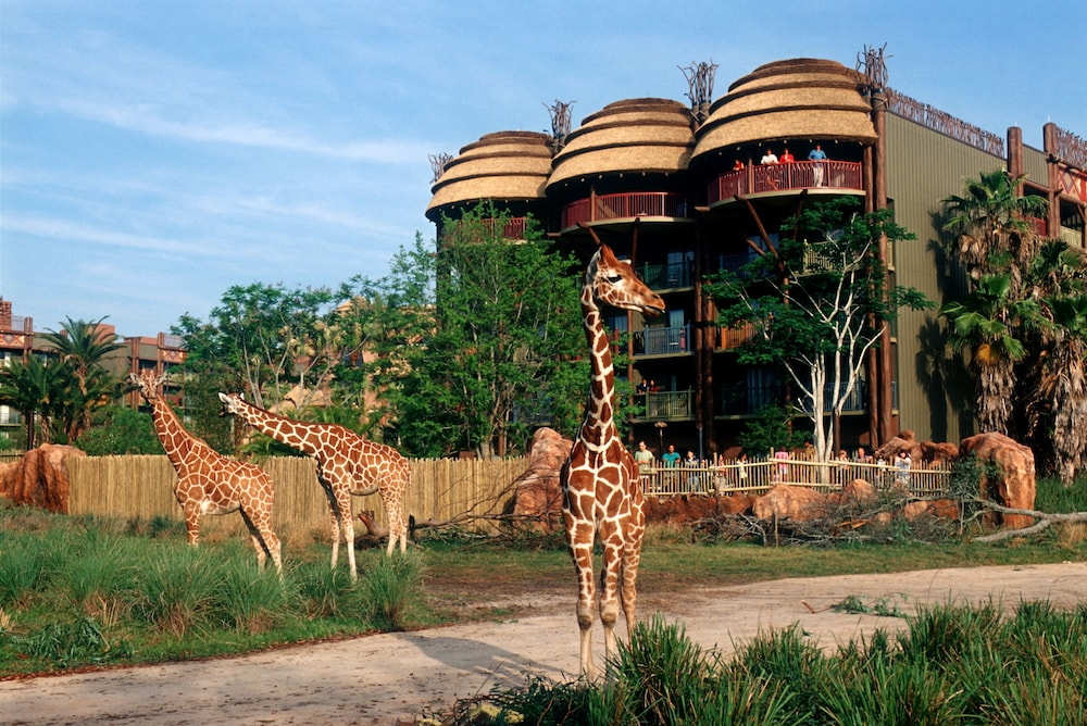Safari, Disney's Animal Kingdom Lodge