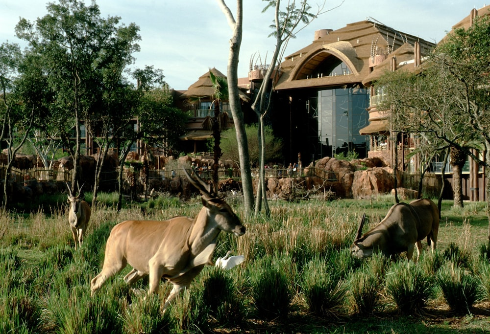 Exterior, Disney's Animal Kingdom Lodge