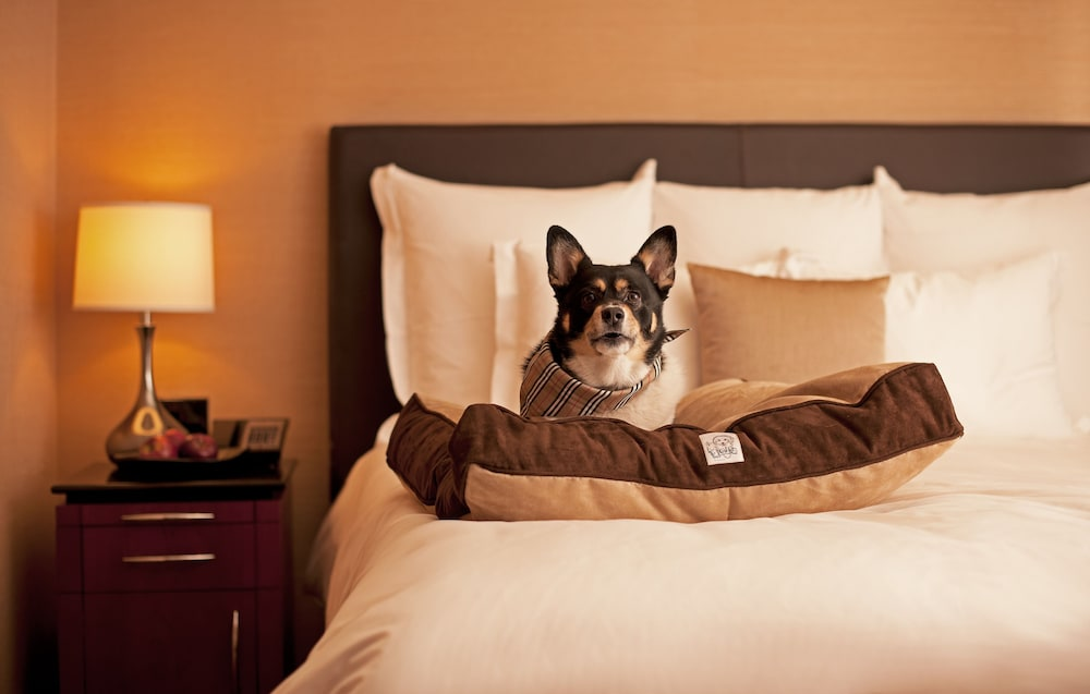 Pet-Friendly, Royal Palms Resort and Spa, part of Hyatt