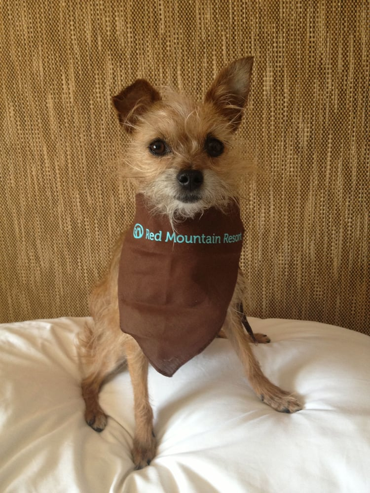 Pet-Friendly, Red Mountain Resort