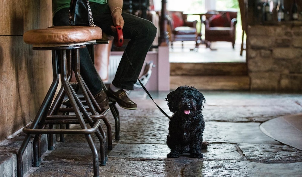 Pet-Friendly, The Burnside Hotel